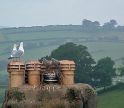 English countryside with seagulls