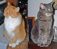 orange and grey tabby cats