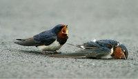 grieving-bird-fullsize