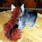 kitten-boo