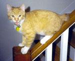 kitten-spike