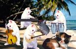 kittens-happymusic