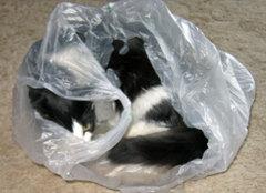 black & white kitten hiding in a bag
