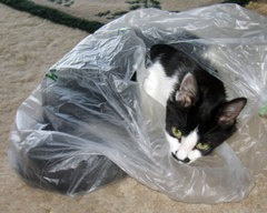 kitten peeks out of the bag