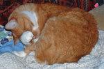orange cat bathing