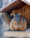 squirrel-morning