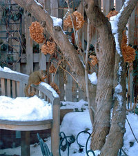 Through the winter window -- snowy garden with bench and squirrel